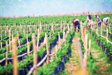 Nhóm Thaco nắm giữ 13,12% công ty nông nghiệp của Bầu Đức