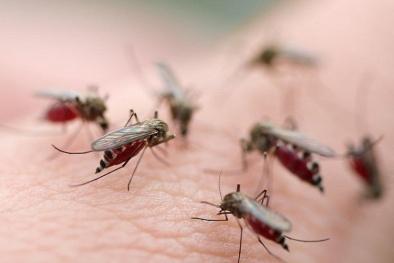 Bác sĩ cảnh báo dịch sốt xuất huyết lan rộng, nguy hiểm đến sức khỏe
