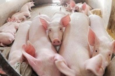Giá thịt lợn tiếp tục trong đà tăng mạnh