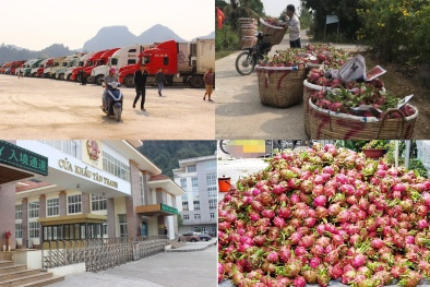 Nông sản Việt xuất khẩu bị ảnh hưởng bởi virus corona