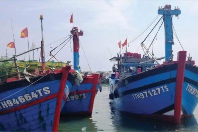 Tàu cá vi phạm vùng khai thác vẫn tái diễn, khó gỡ thẻ vàng IUU