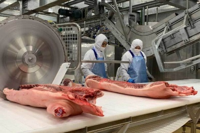 Giá lợn hơi giảm mạnh, người chăn nuôi lại lo lắng