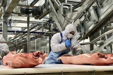Giá thịt lợn dịp Tết Nguyên đán sẽ tăng mạnh?
