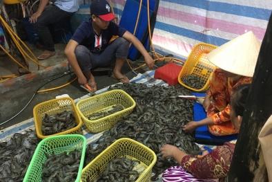 80 kg tôm tươi đang được bơm tạp chất bị bắt giữ