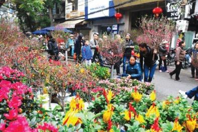 Thị trường hoa, cây cảnh dịp Tết: Giá rẻ vẫn vắng khách