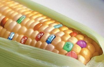 Nguy hại không ngờ từ thực phẩm biến đổi gen