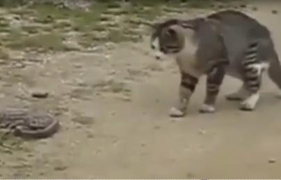Clip: Mèo bắt răn trong vòng 1 phút