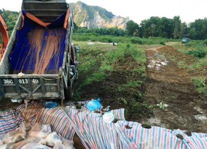 Tiêu hủy 4.000 con lợn chết tại Thanh Hóa
