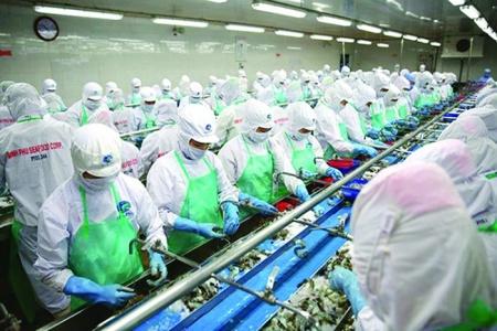 Lợi nhuận Thủy sản Minh Phú tiếp tục 'xuống dốc'