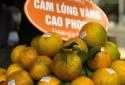 Sửa đổi Giấy chứng nhận đăng ký chỉ dẫn địa lý cam Cao Phong