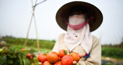 Hanoi will trace the origin, avoid disguised as Hai Duong agricultural products for profit